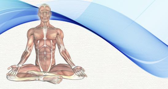 Anatomia Aplicada ao Yoga II - Os sistemas e a prática