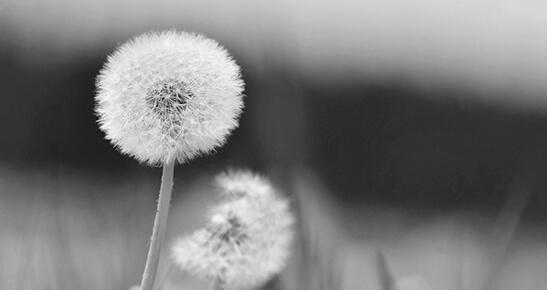 Perdas, Morte e Luto: aspectos introdutórios
